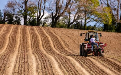 The Domaine Evremond journey continues – a further 8.5 hectares planted