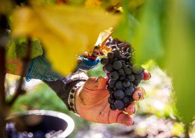 DomaineEvremond 2019 Harvest A