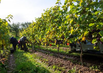 DomaineEvremond 2019 Harvest G